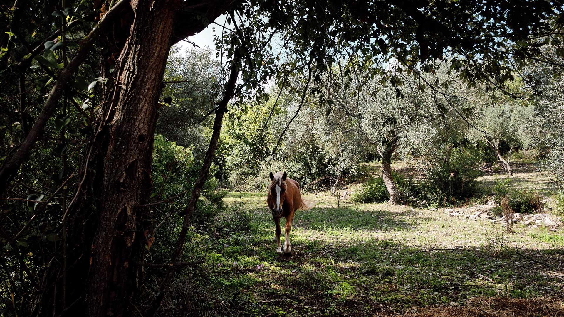 Seminari sul cavallo